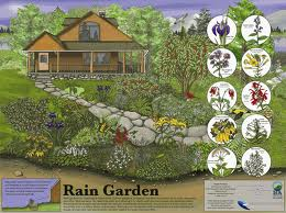 rain garden design raingardens are mini wetlands built to intercept stormwater run off they collect retain and filter water that would normally run - Rain Garden Design